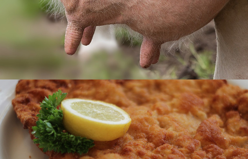 Berlin's improbable culinary curiosity - a schnitzel made from cow's udders!