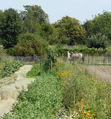 The tranquil Dahlem Domaene working countryside farm
